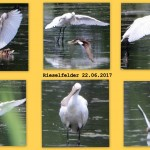 loffler14cr